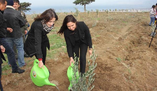 Arsuz'da köylülere destek için 8 Bin fidan dikildi