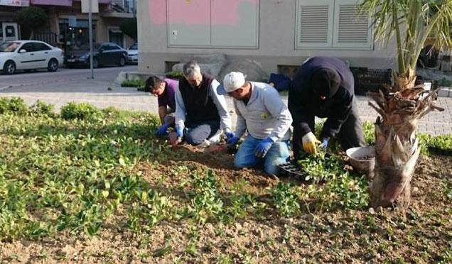 Samandağ Belediyesi Park Bahçe Müdürlüğü çalışmaları