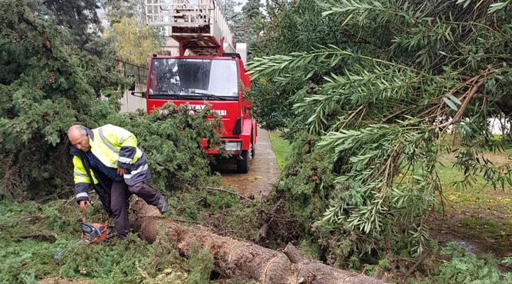 Kırıkhan'da fırtına ağaçları kökünden söktü