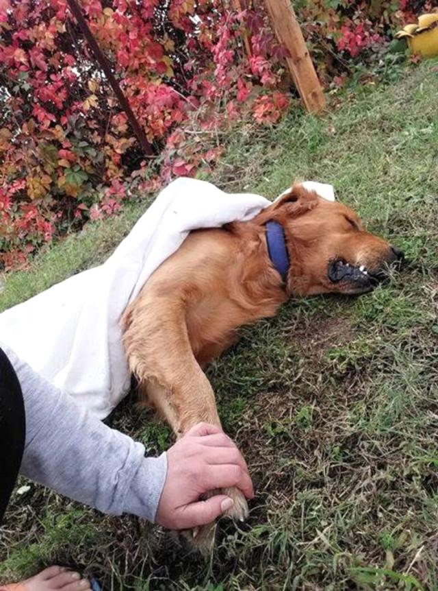 Hatay da 3 Köpek Zehirlenerek Telef Edildi