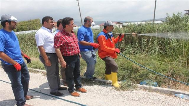 Samandağ Belediyesi 'Karasinek ve sivri sinekle mücadele' çalışmasını sürdürüyor
