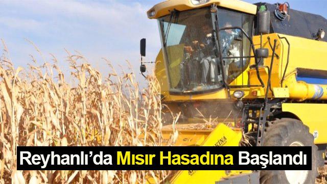 Reyhanlı'da mısır hasadına başlandı