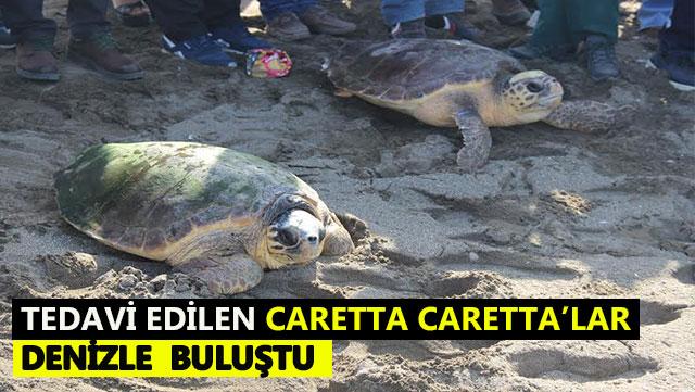 Tedavi edilen Caretta Caretta'lar denizle buluştu