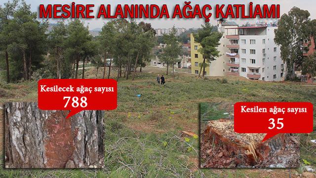 Kırıkhan'da ağaç katliamına vatandaş engeli