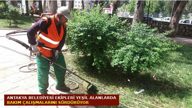 Antakya Belediyesi yeşil alanlarda bakım çalışmalarını sürdürüyor