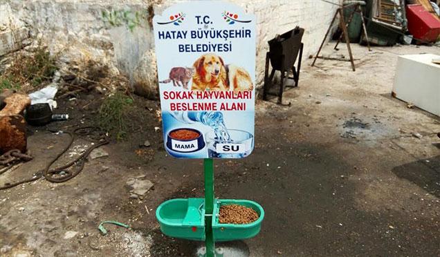 HBB hayvan haklarını gözeterek hizmetler sunmaya devam ediyor