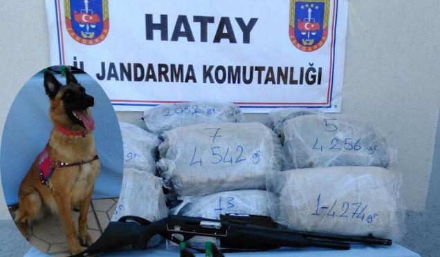 Jandarmanın operasyonuyla bir evde 61 kilo esrar ele geçirildi