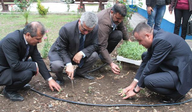 Arsuz'da 24 Bin adet Adaçayı fidesi dağıtıldı