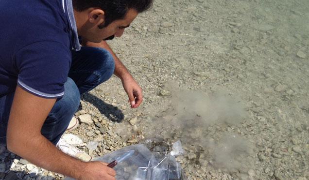 Hatay'da Göllere 115 Bin balık bırakıldı