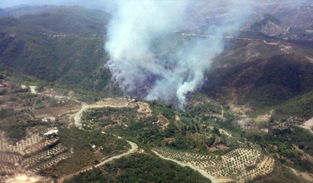 Sınır hattında orman yangını