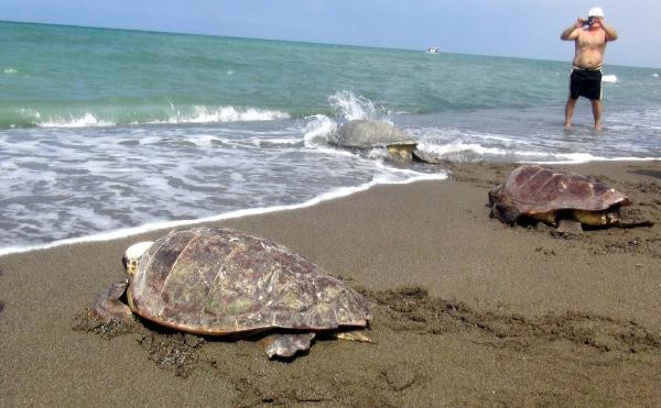 Tedavi edilen Kaplumbağalar Denize bırakıldı