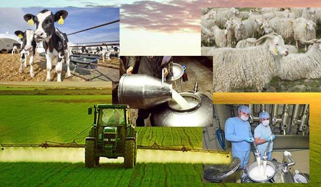 Çiftçilere 918 milyon TL'lik destek ödemesi bugün başlanıyor
