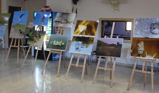 Kırıkhan'da 'Biyolojik Çeşitliliği' resim sergisi açıldı