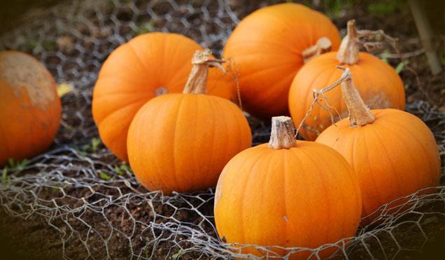 Sonbaharda bedeninize iyi gelecek 7 besin