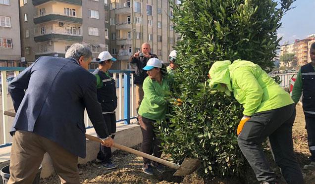 Uğur Mumcu Meydanına ilk ağaç barış kardeşlik için dikildi
