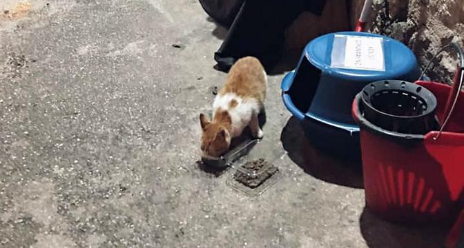 Antakya sokaklarında mutlu eden görüntü; Leğenden 'Kedi evi' yaptılar