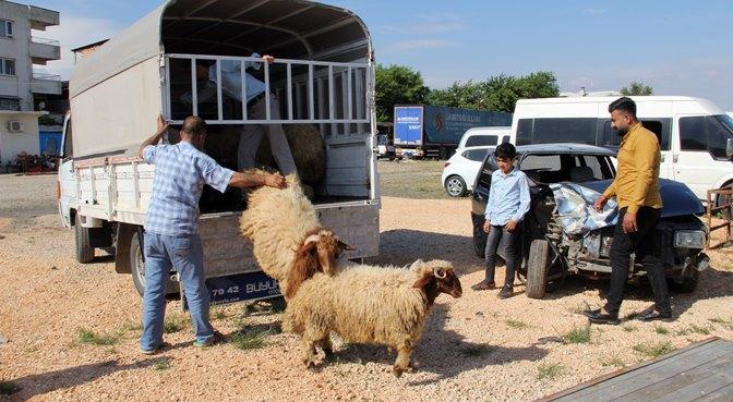 Kırıkhan'da kaçak hayvan ele geçirildi