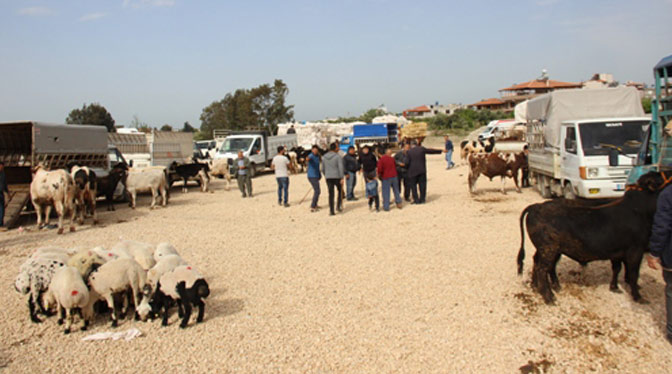 Samandağ'da ilk kez hayvan pazarı kuruldu