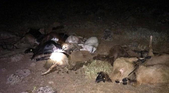Kırıkhan'da pamuk tarlasından su içen 30 hayvan telef oldu