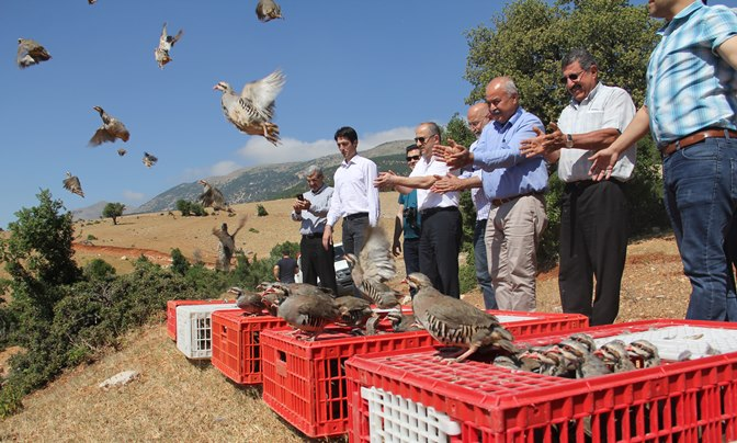 Kırıkhan'da Bin adet kınalı keklik doğaya bırakıldı