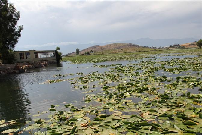 Gölbaşı Gölünü Nilüferler kapladı