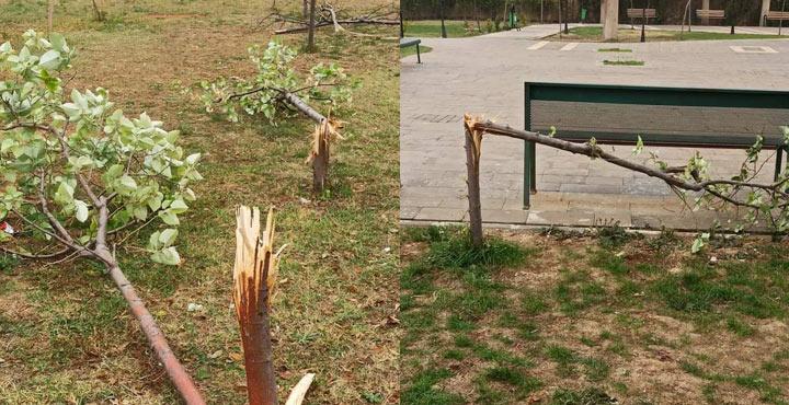 Parktaki ağaçlara zarar veren şahıslar hakkında suç duyurusu