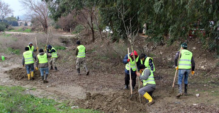 Hatay'da bu yıl 10 bin çınar ağacı dikilecek