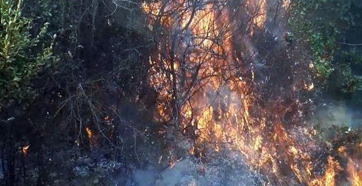Zeytinlikte çıkan yangın söndürüldü