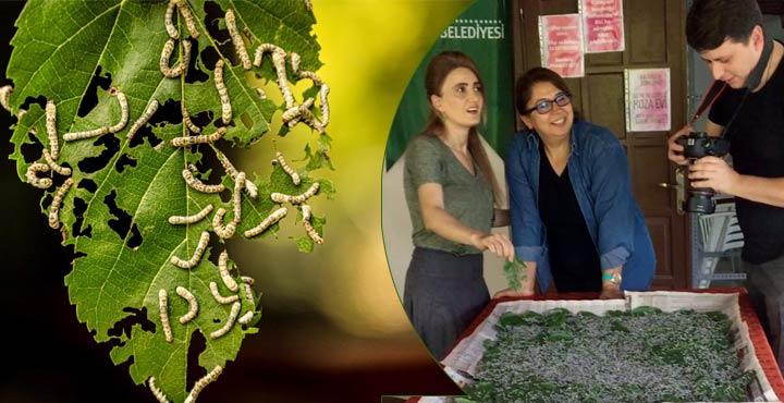İpekböceği ve İpek Ürünleri için yeni proje