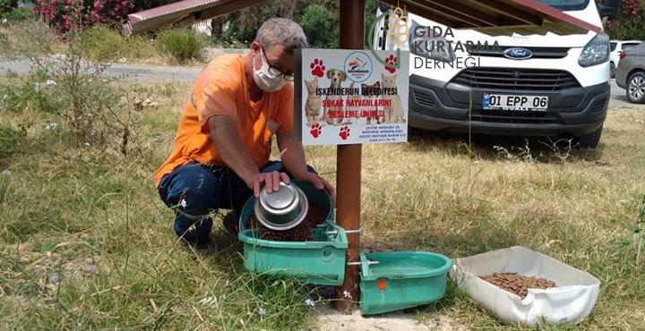 Sokak hayvanlarının günlük yemek ve su ihtiyacı karşılanıyor