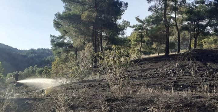 Zeytinlikte çıkan yangın ormana sıçramadan söndürüldü
