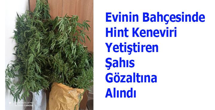 Evinin Bahçesinde Hint Keneviri Yetiştiren Şahıs Gözaltına Alındı