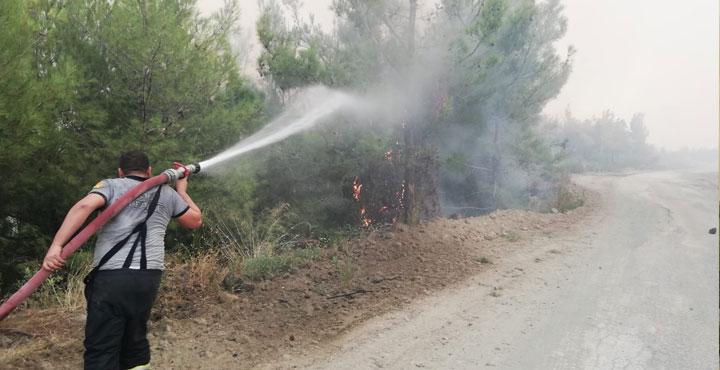 OGM'den orman yangınlarıyla ilgili anlamlı video