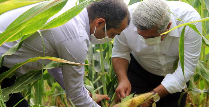 Hataylı çiftçiler dünya ortalamasının üzerinde verim alıyor