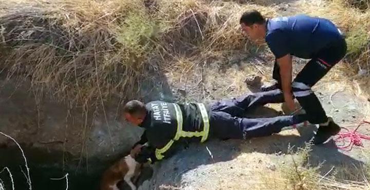 Su kuyusunda mahsur kalan köpeği itfaiye kurtardı