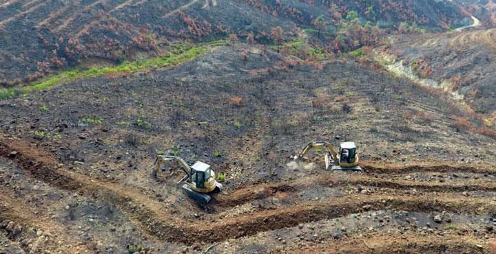Yanan ormanlık alanlarda fidan dikme çalışmaları başlatıldı