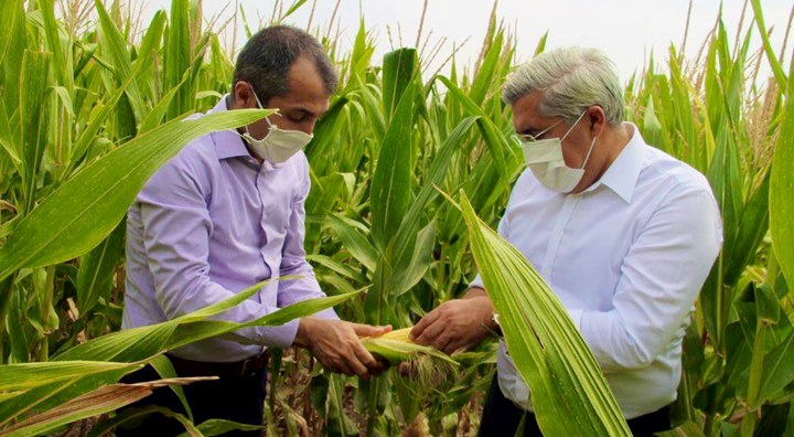 Ova çiftçisine Mısır desteği müjdesi