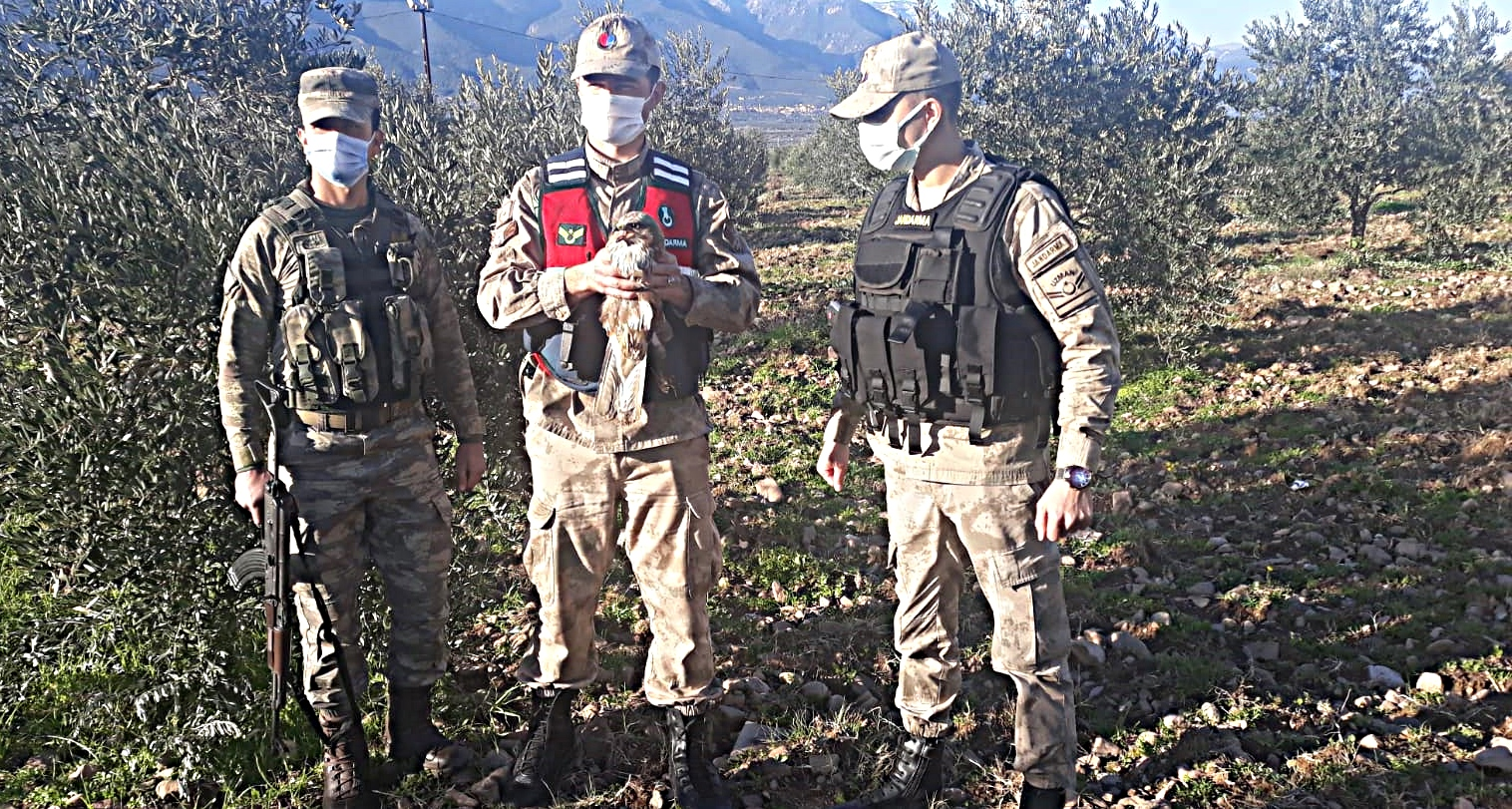 Devriye Gezen Jandarma, Bulduğu Yaralı Atmacayı DKMPM'ye Teslim Etti
