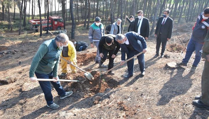 Kaymakam Arslan Öncülüğünde Yanan Orman Alanına 5000 Adet Fıstık Çamı Dikildi