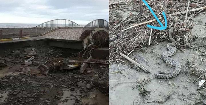 Aşırı Yağışlar Sonucu Bir Çok Yer Zarar Gördü, Canlılar Telef Oldu