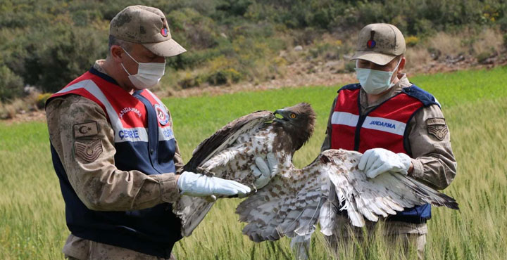 Yaralı Kartal Tedavi İçin Doğa Koruma Milli Parklar Müdürlüğünde