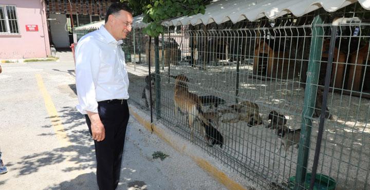 Başkan Savaş; Köpekler Sıcak Yuva ve Sahiplerini Bekliyor