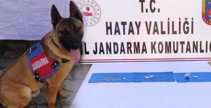 Kırıkhan'da uyuşturucu arama köpeği ile operasyon