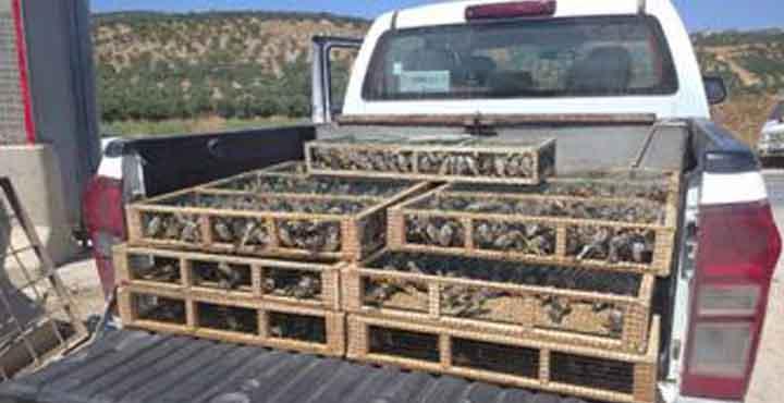 Saka Kuşu Avlayan 3 Şahıs Gözaltına Alındı