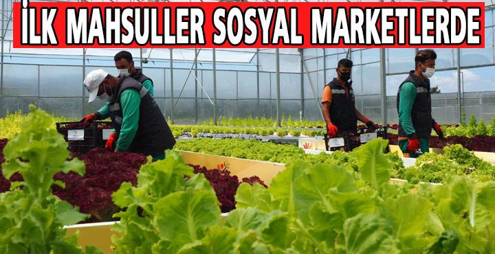 Topraksız Tarımın İlk Mahsulleri Sosyal Marketlerde