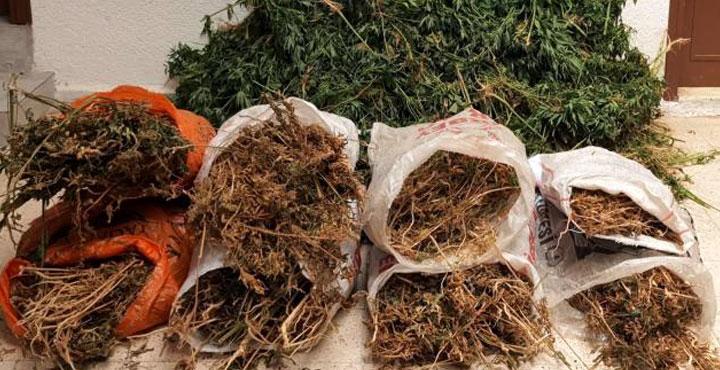 Arsuz'da 10 bin kök kenevir ele geçirildi