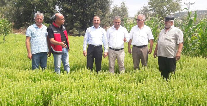 İl Tarım Müdüründen Fesleğen ve Melisa Üreticilerine Ziyaret
